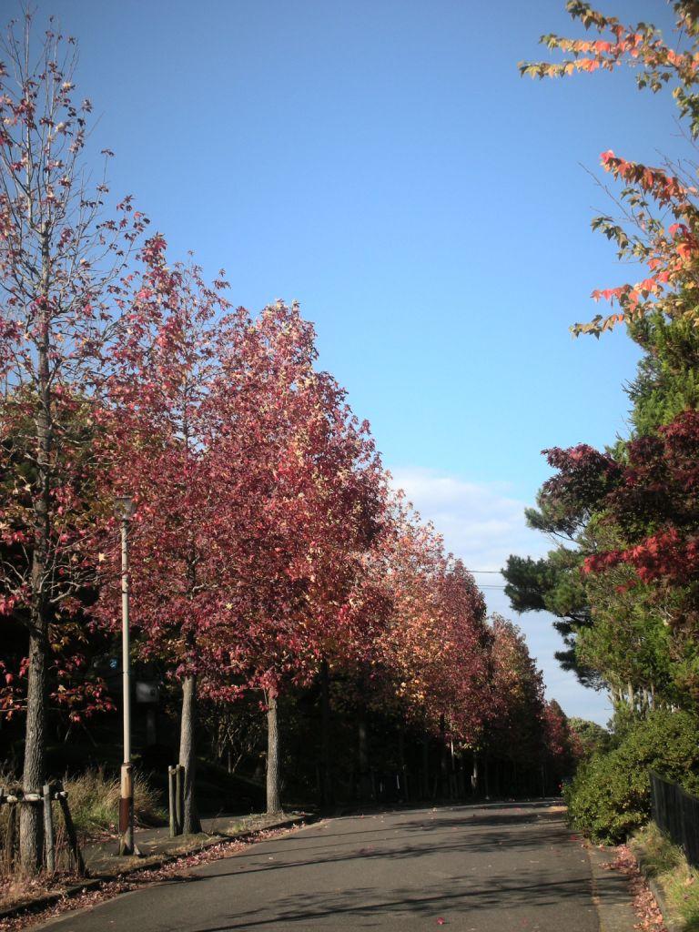 autumnleaf.jpg