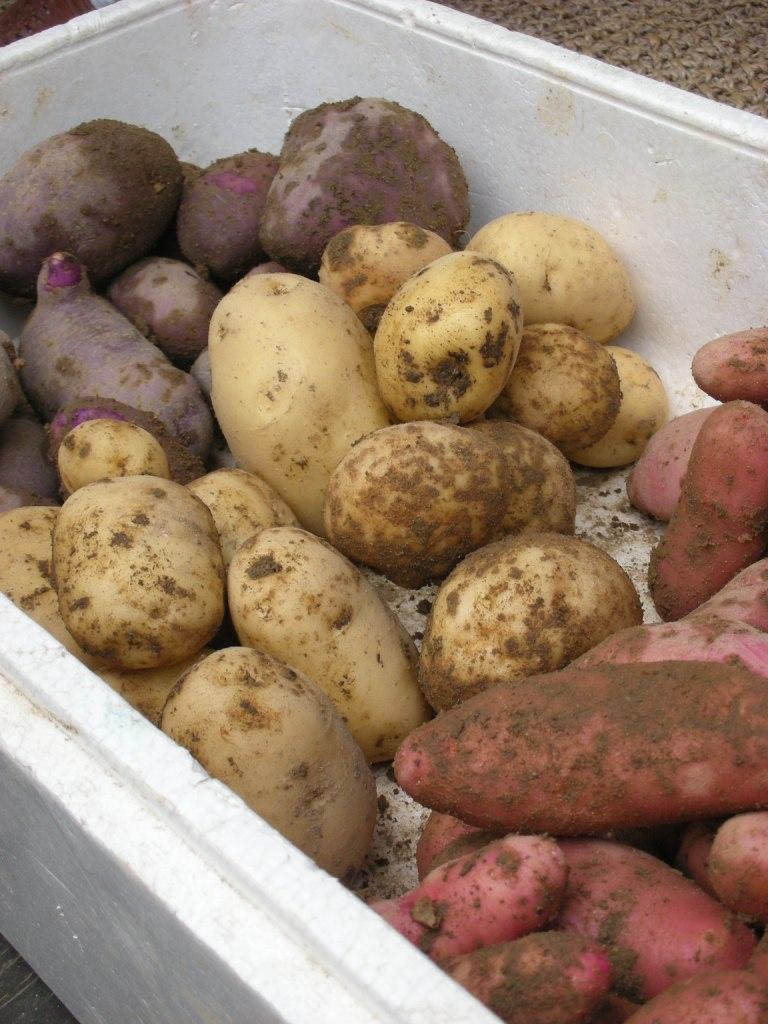 potato01.jpg